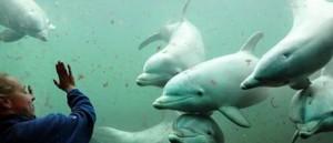 دانستنی هایی درباره دلفین های دوست داشتنی