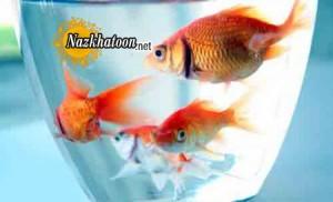 مواظبت از ماهی قرمز عید نوروز