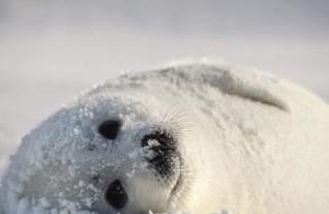 حیوانات چگونه خود را در زمستان سرد می کنند؟