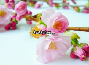 عکس های گل بهاری بسیار زیبا