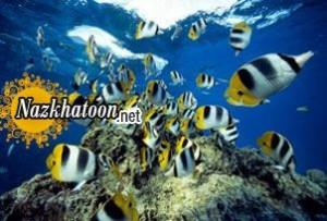 نفس کشیدن ماهی ها در آب !