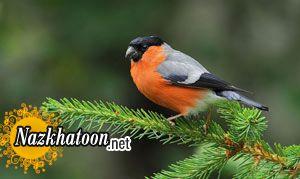 دانستنیهایی از پرندگان