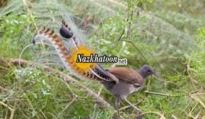 پرنده ای با حنجره طلایی