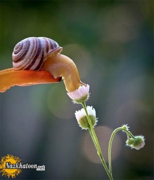 تصاویر زیبا از زندگی و طبیعت حلزون ها