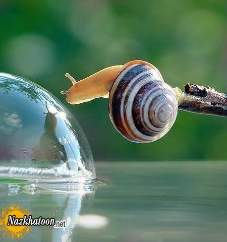 snails-10