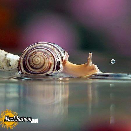 snails-11