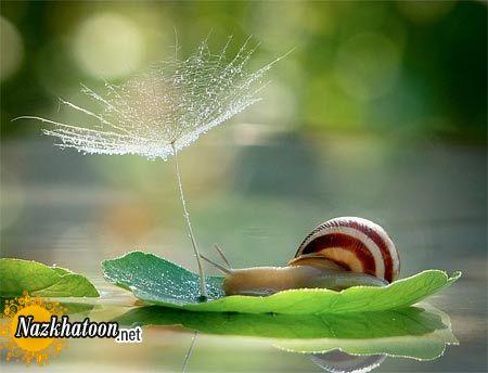 snails-12