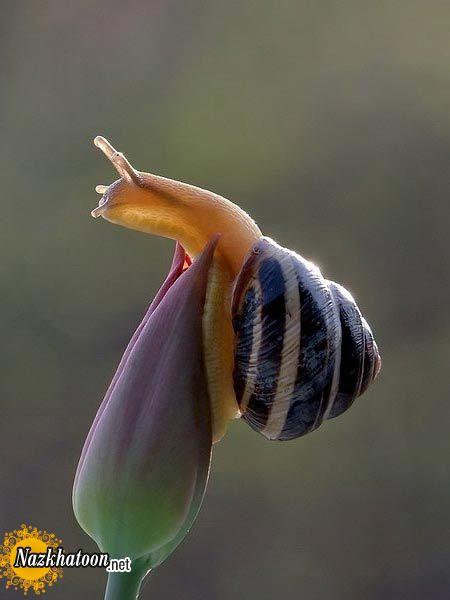 snails-13