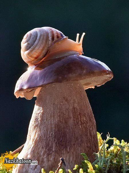 snails-14