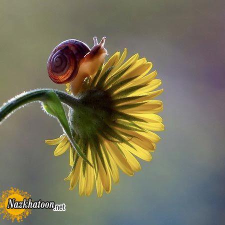 snails-15