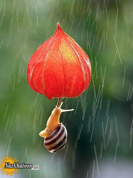 snails-16