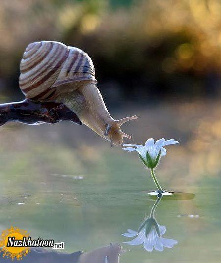 snails-17