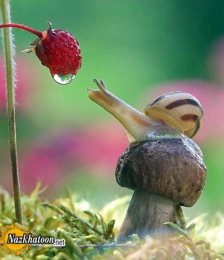 snails-4
