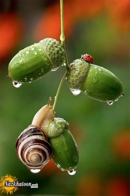 snails-5