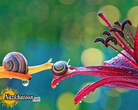 snails-7