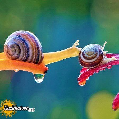 snails-8