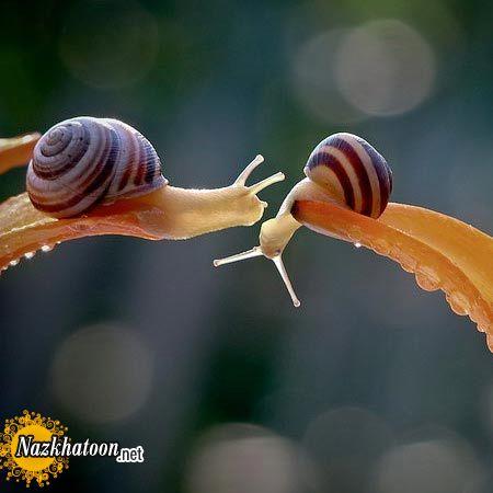 snails-9