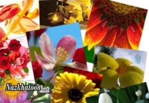 چند حقیقت جالب در مورد گل ها