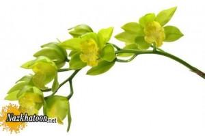 تصاویر گل های بینظیر و دوست داشتنی
