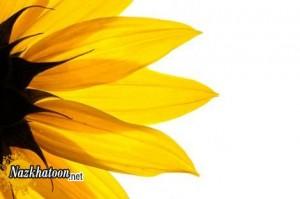سری جدید تصاویر گل های طبیعی و زیبا