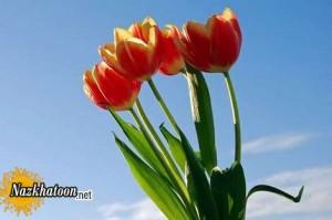 تصاویر زیبا از گل های دوست داشتنی