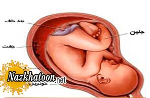 دانستنی های لکهبینی در روزهای اول بارداری