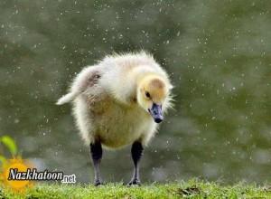 عکس های زیبا از طبیعت و حیوانات