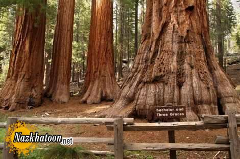 California-nature-photos-15