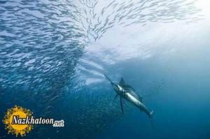 تصاویر شگفت انگیز از دنیای زیر آب ها