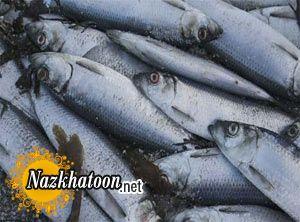 چرا ماهی بوی زننده ای دارد؟