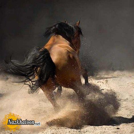 horses-11