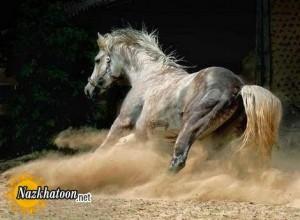 تصاویر زیبا از اسب های وحشی – سری ۱