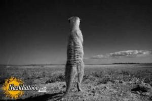 عکسهای دیدنی از شکار لحظه ها