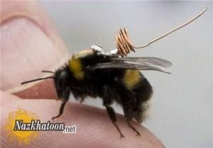 کوچکترین سنسور ردیابی زنبور