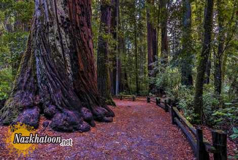 California-nature-photos-27