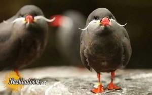 تصاویر پرندگان زیبا و عجیب