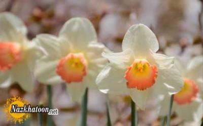 تصاویر زیبا از گل های طبیعی