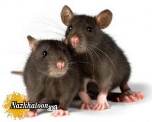 رفتار موش ها در برابر ترس
