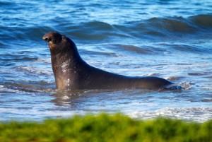 اطلاعاتی راجع به خوک دریایی