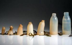 ساخت بطری آب با جلبک