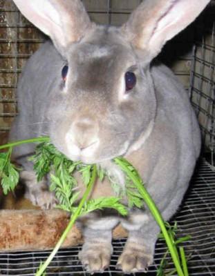 مراقبت و غذا دادن به خرگوش