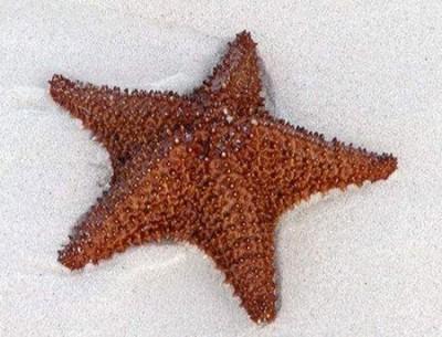 آشنایی و شناخت ستاره دریایی