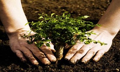 مواد تشکیل دهنده انواع خاک