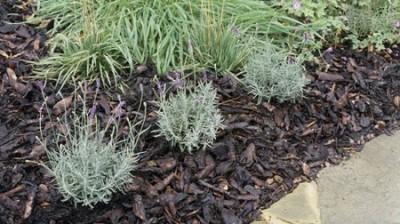 صرفه جویی آب در حیاط و باغچه