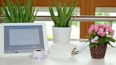 دستگاهی برای شنیدن درد دل گیاهان
