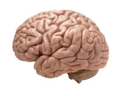 علت بزرگی مغز انسان