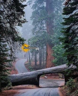 عکس های دیدنی طبیعت – ۳