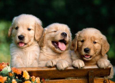 نکات نگهداری از حیواناتِ خانگی