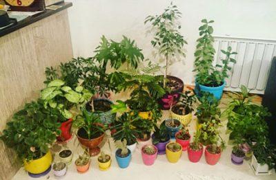 آشنایی با راز شادابی گیاهان آپارتمانی