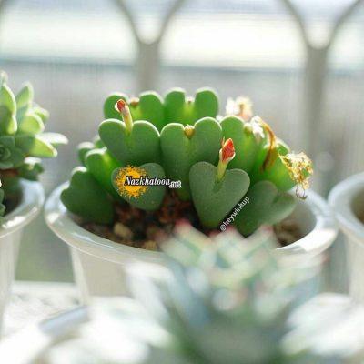 تصاویر گل و گیاه – ۱